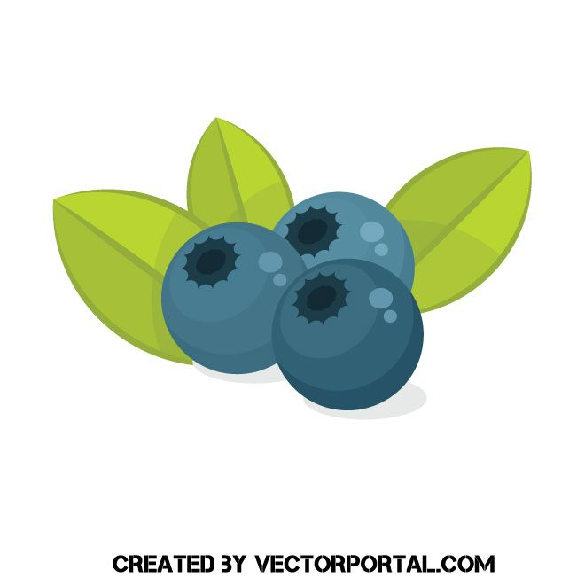 Blueberry clipart vector. With leaves free image