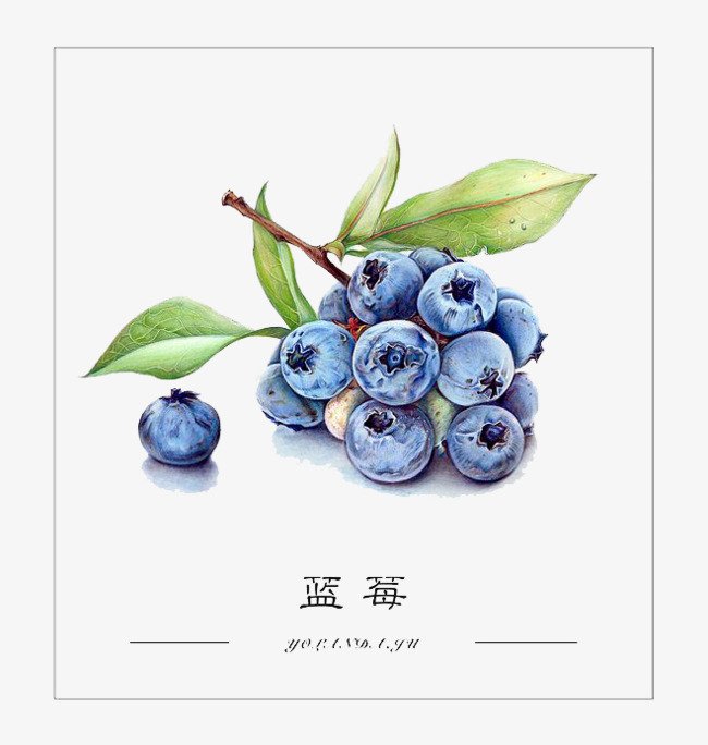 Blueberries clipart watercolor. Blueberry fruit blue png
