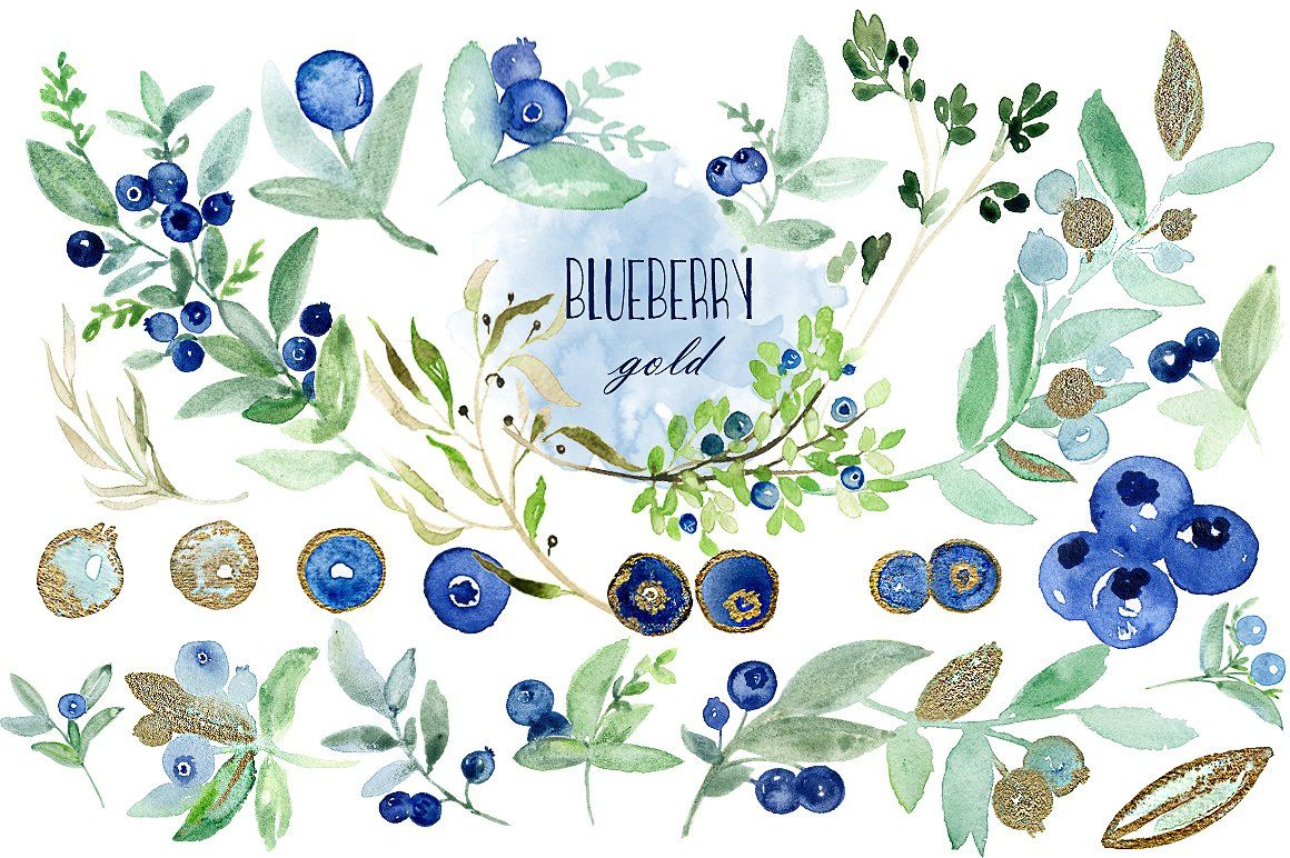 blueberries clipart watercolor