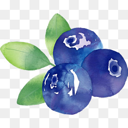Blueberries clipart watercolor. Blueberry png vectors psd