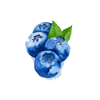 With leaves premium . Blueberries clipart watercolor