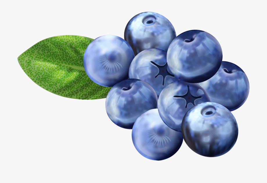 Png free clip art. Blueberry clipart