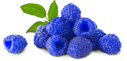 The pineapple pinterest. Blueberry clipart blue raspberry