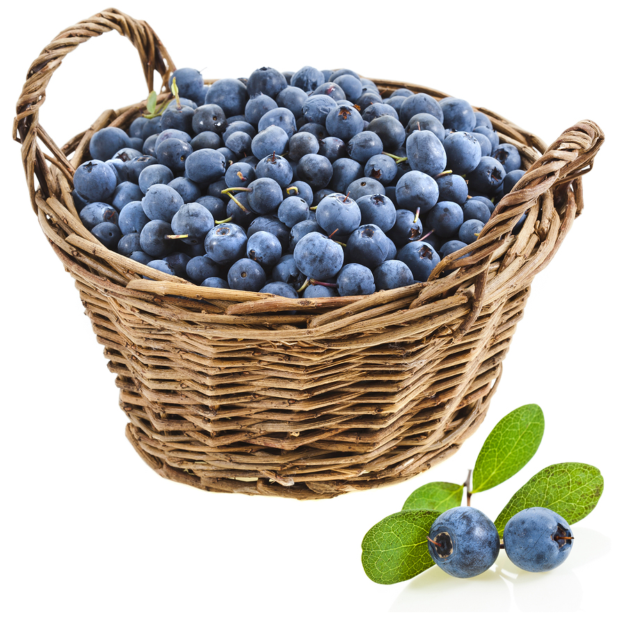 Blueberry clipart blueberry basket. Cliparts zone food faith