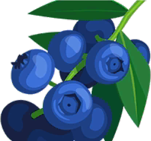 Blueberry clipart blueberry bush. Of blueberries transparent cartoon