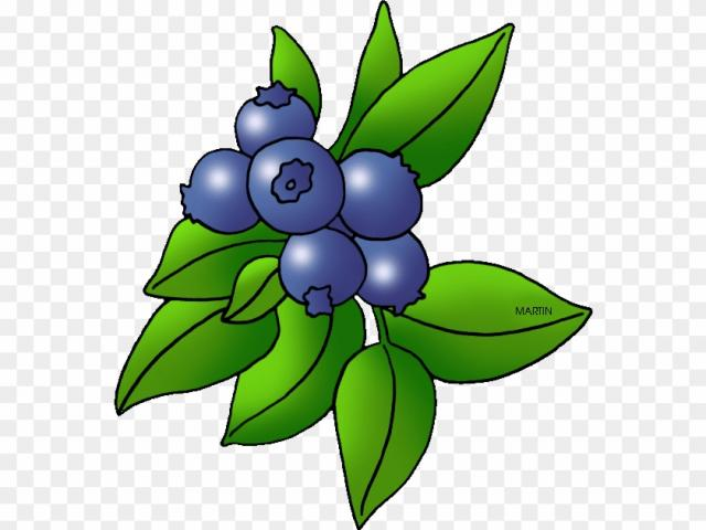 Free download clip art. Blueberry clipart blueberry bush