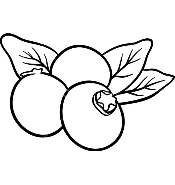 Drawing at getdrawings com. Blueberry clipart blueberry fruit