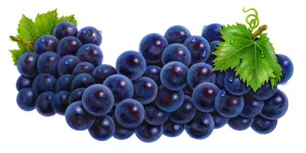 Blueberry clipart blueberry fruit. Lofty design ideas blueberries
