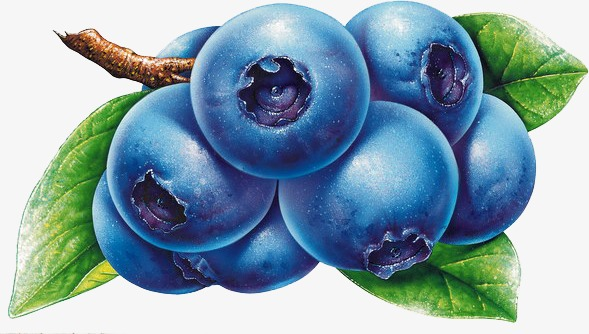 Blueberry clipart blueberry fruit. Food png image and