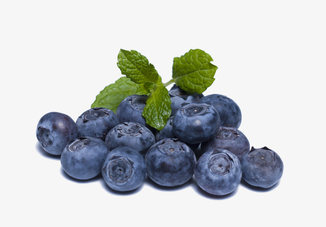 Blueberry clipart blueberry fruit. Png pictures free download