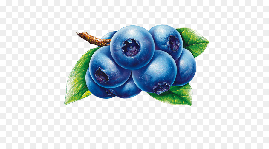 Juice plant png download. Blueberry clipart blueberry fruit