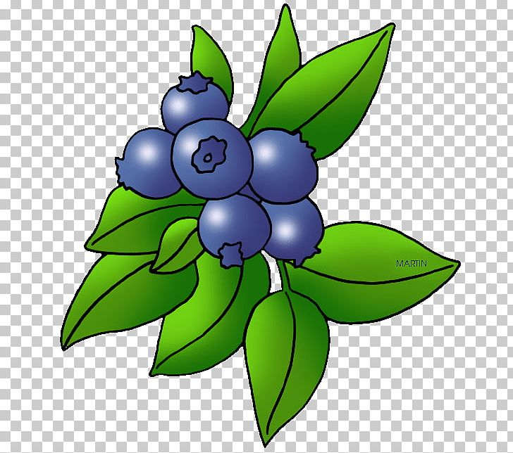 Blueberry clipart blueberry plant. Blackberry fruit png artwork