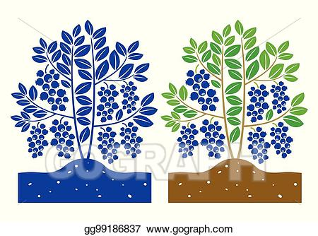 Blueberry clipart blueberry plant. Vector stock illustration