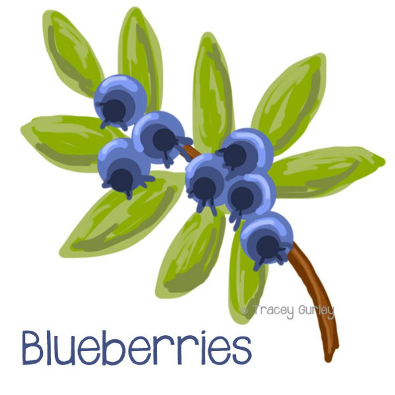 Blueberries painting original art. Blueberry clipart blueberry plant