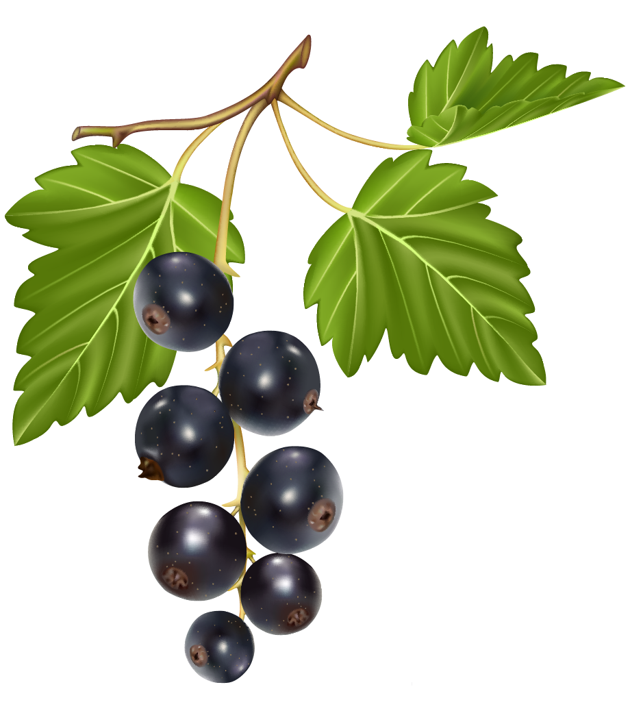 Blueberries png best web. Blueberry clipart blueberry tree