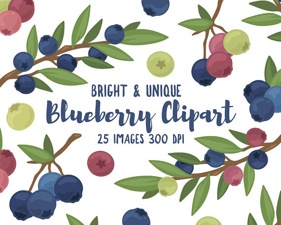 Blueberry clipart branch. Hi res png files