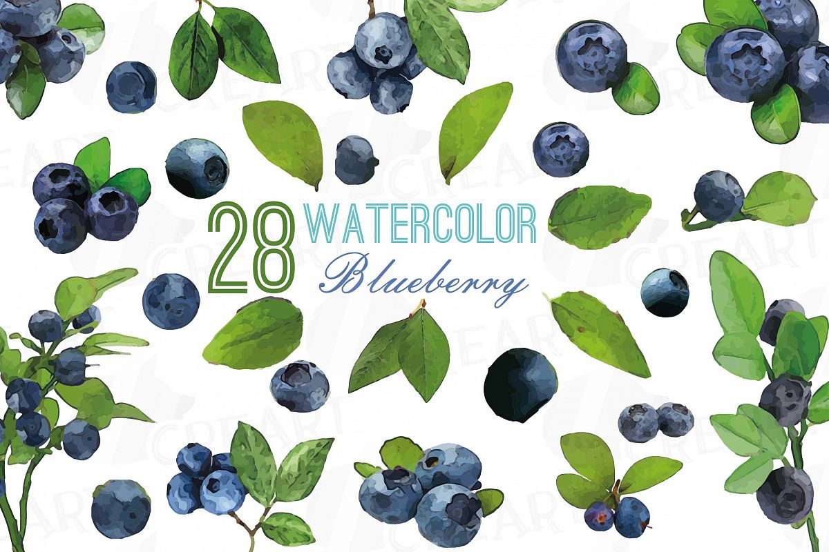 Watercolor and leaves vector. Blueberry clipart branch
