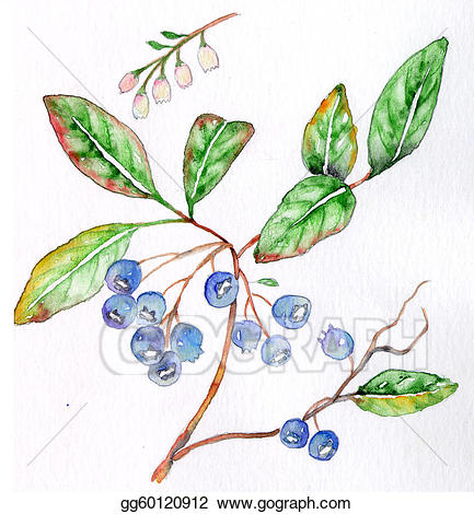 Blueberry clipart branch. Stock illustration clip art