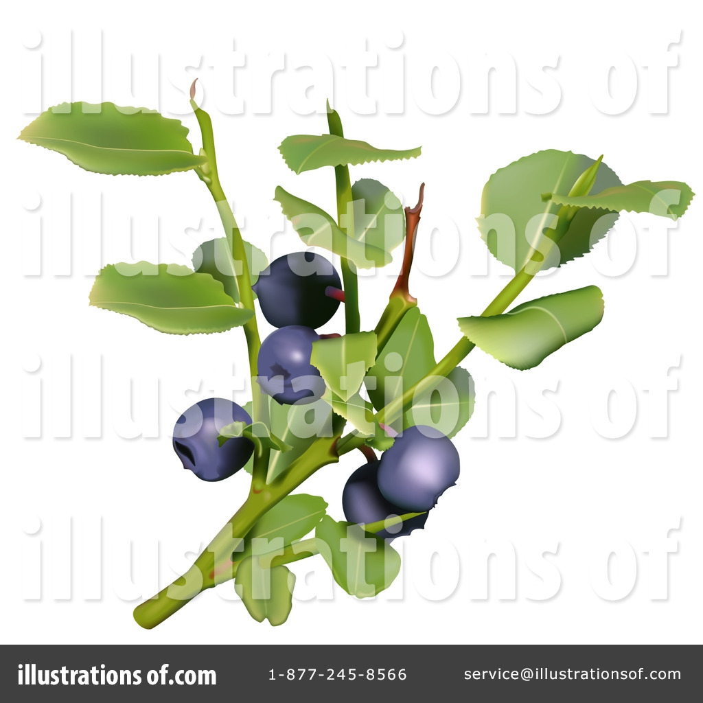 Illustration by dero royaltyfree. Blueberry clipart branch