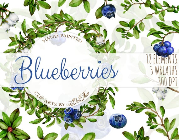 Watercolor blueberries branches vines. Blueberry clipart clip art