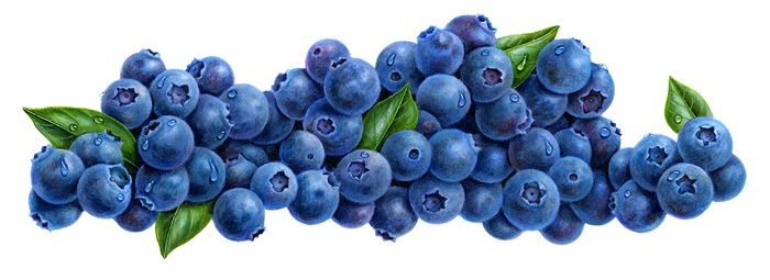 Blueberries clipart.  making markers work