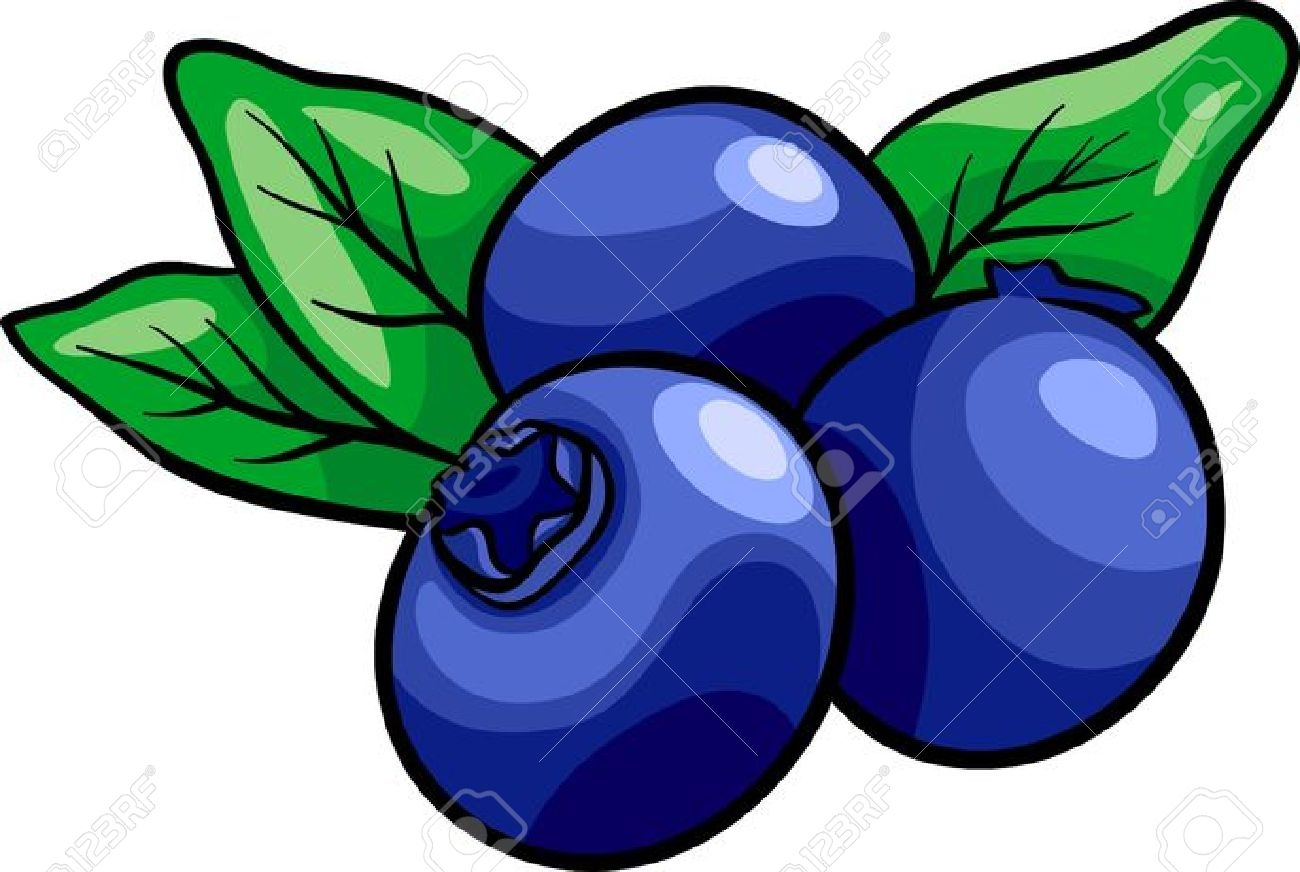 Fresh blueberry gallery digital. Blueberries clipart color
