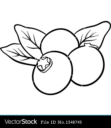 Blueberry black and white. Blueberries clipart color