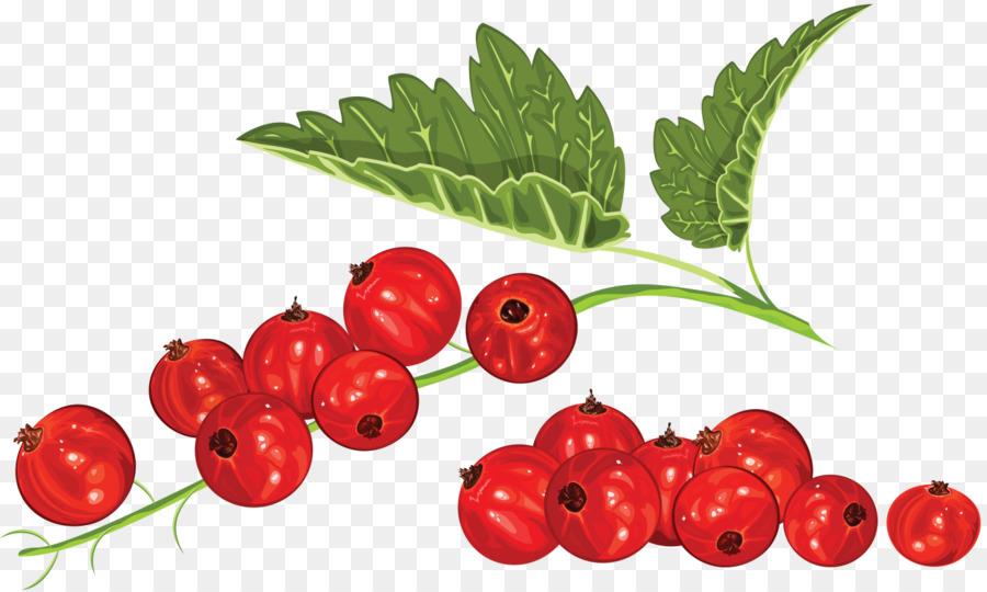 Blueberry clipart cranberry. Blackcurrant redcurrant clip art