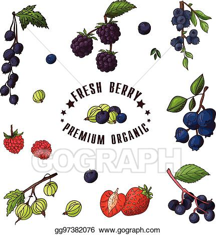 Blueberry clipart drawn. Eps illustration hand of