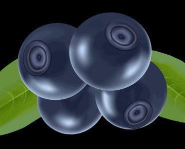 Blueberry clipart fresh. Buddha collection digital gallery