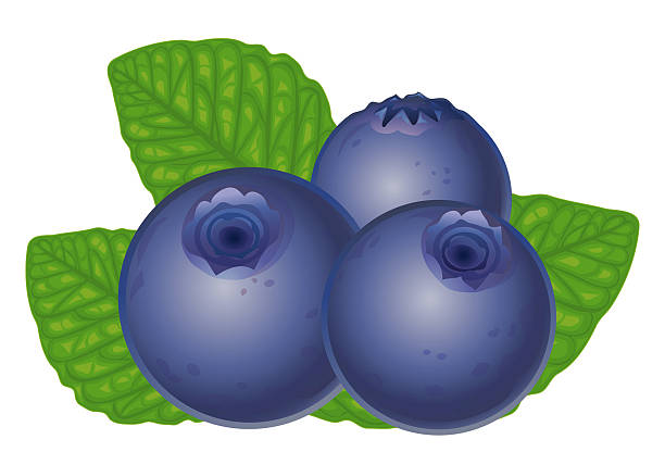 collection of high. Blueberry clipart fresh