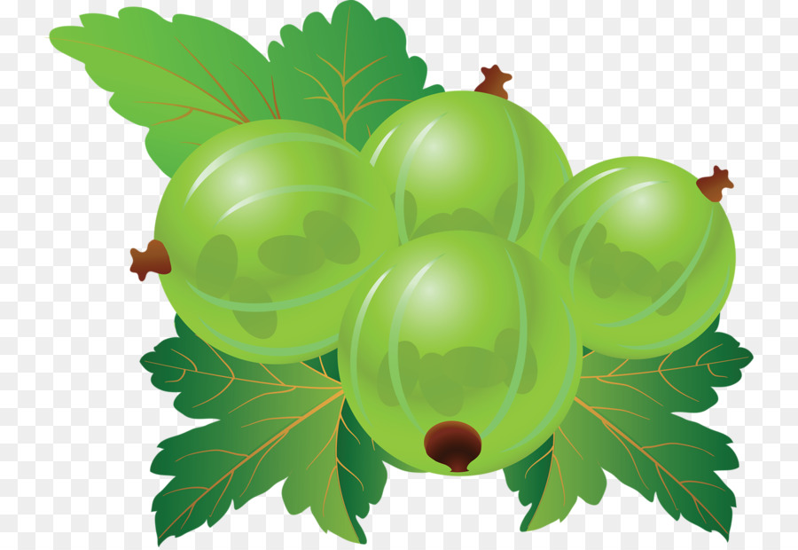 Gooseberry clip art png. Blueberry clipart grape