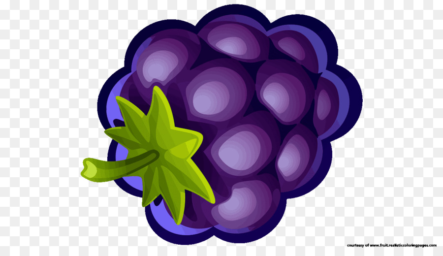 Cartoon transparent clip art. Blueberry clipart grape