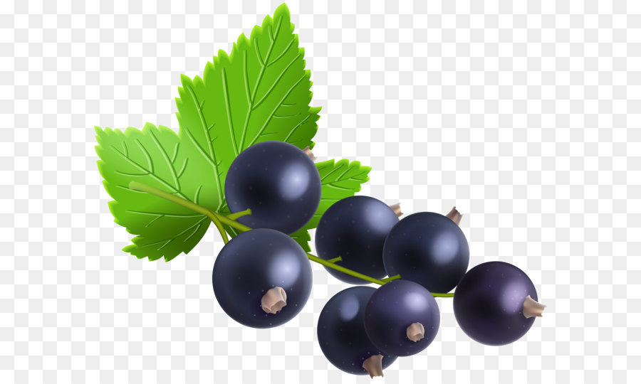 Blackcurrant bilberry redcurrant zante. Blueberry clipart huckleberry