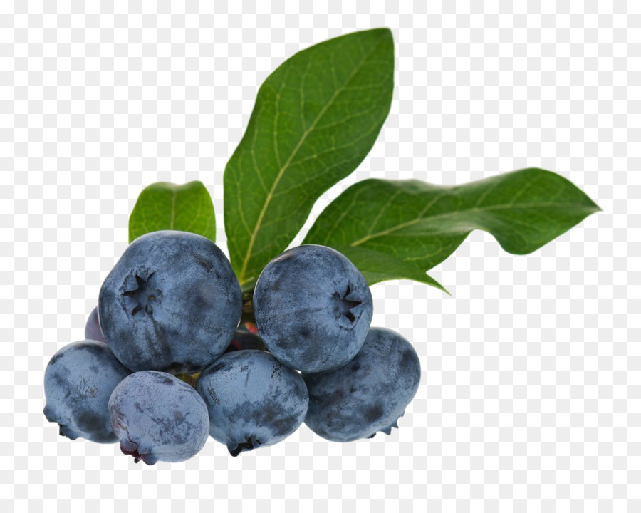 Blueberry clipart huckleberry. Tea bilberry fruit png
