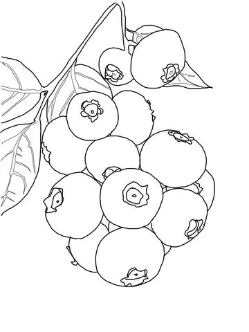Blueberry clipart outline. Bush coloring page from