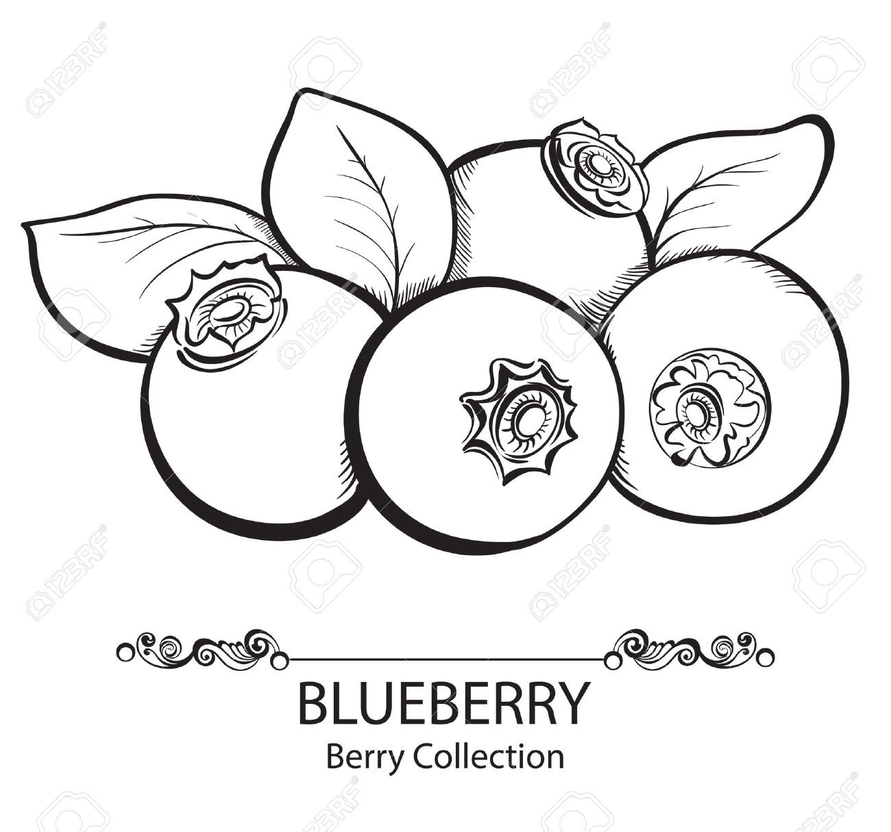 Blueberry clipart outline. Black and white letters
