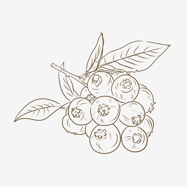 Blueberry clipart sketch. Black and white line