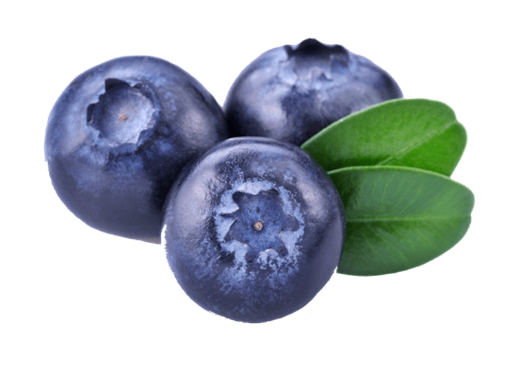 Blueberries transparent png stickpng. Blueberry clipart three