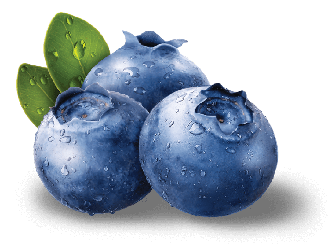 Blueberries clipart transparent background. Png images free download