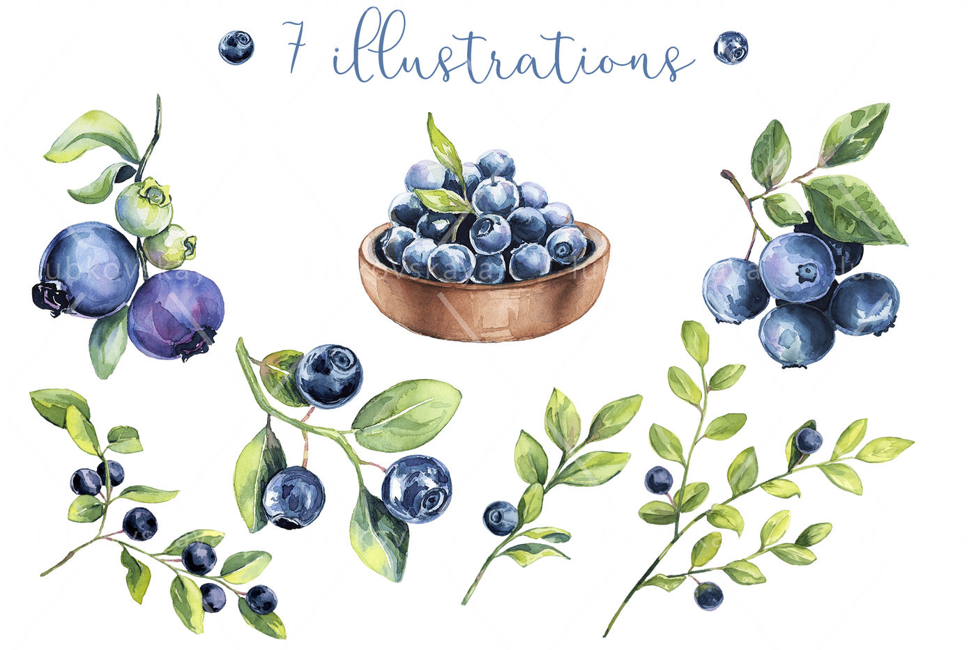 Blueberry clipart watercolor. By colordays thehungryjpeg com