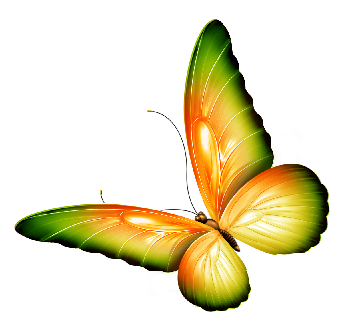 Flowers and butterflies border. Clipart flower insect