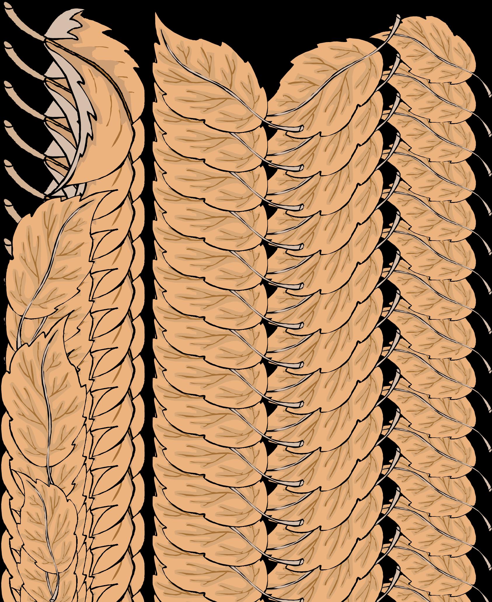 Boarder clipart classy. Leaf border cilpart design