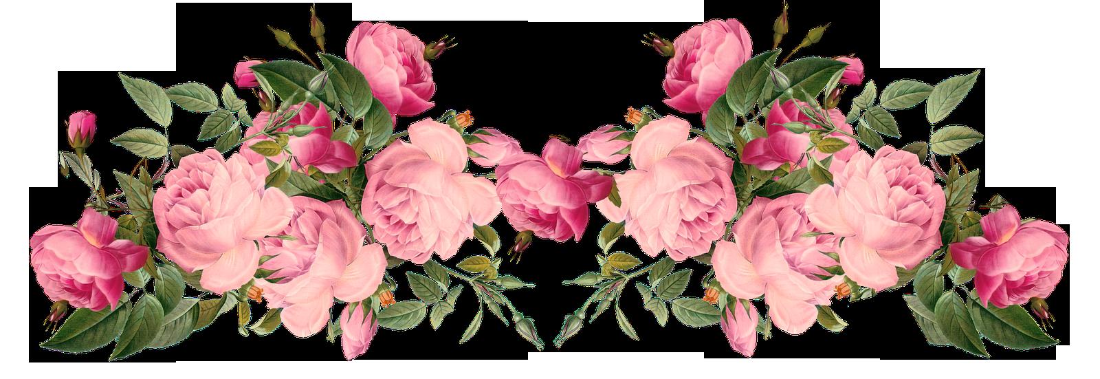 Pink borders free roses. Garland clipart rose