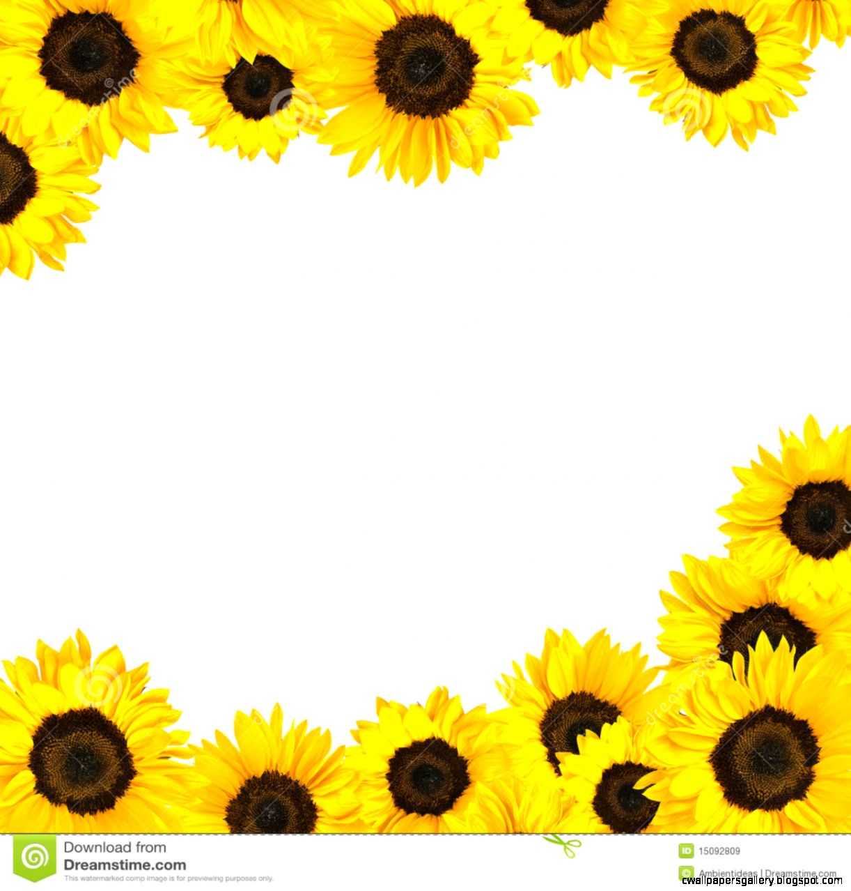 Boarder clipart sunflower. Pictures border drawing art