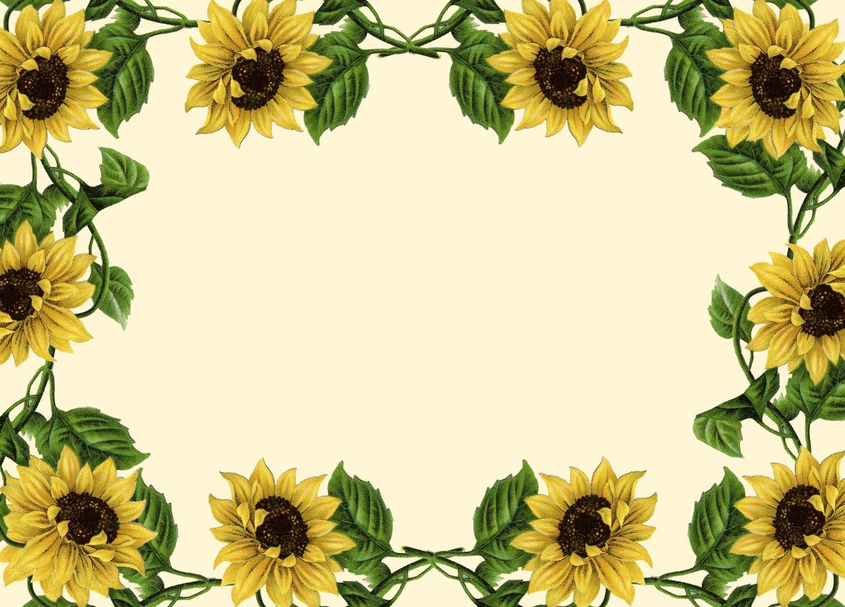 Boarder clipart sunflower. Border clip art borders
