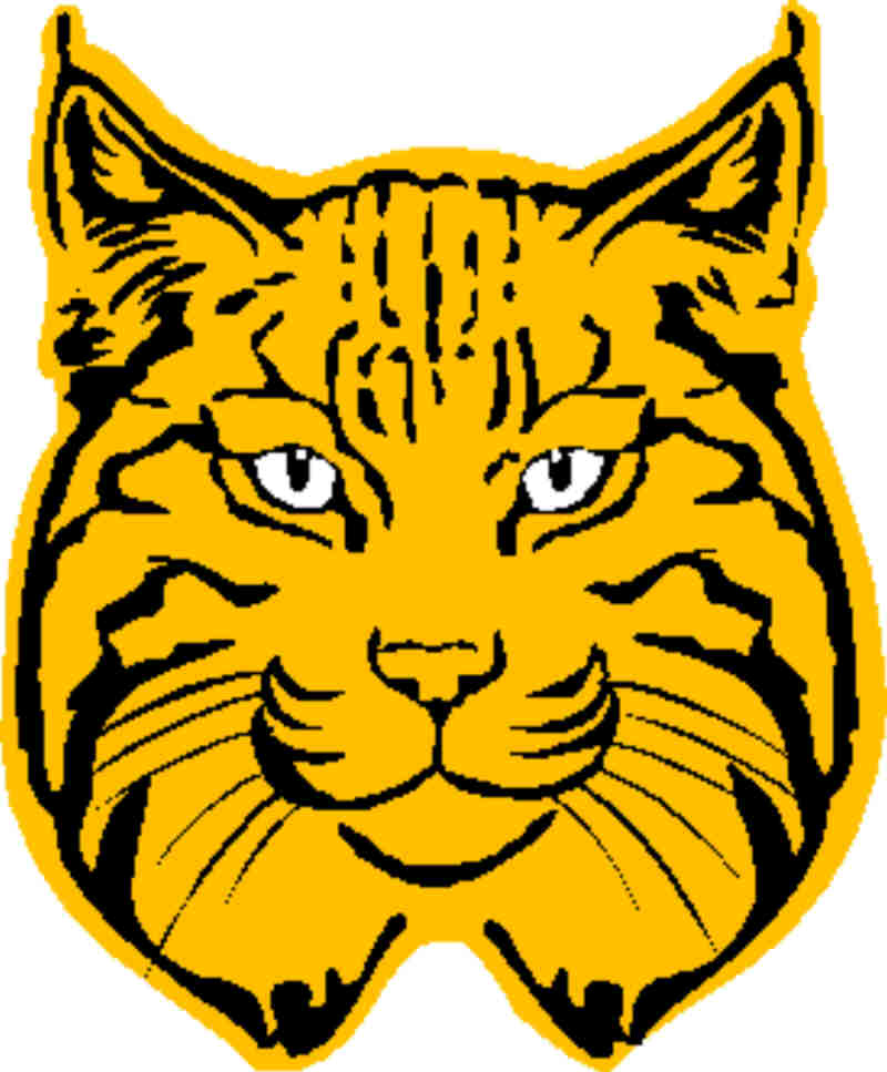 Free cliparts download clip. Bobcat clipart