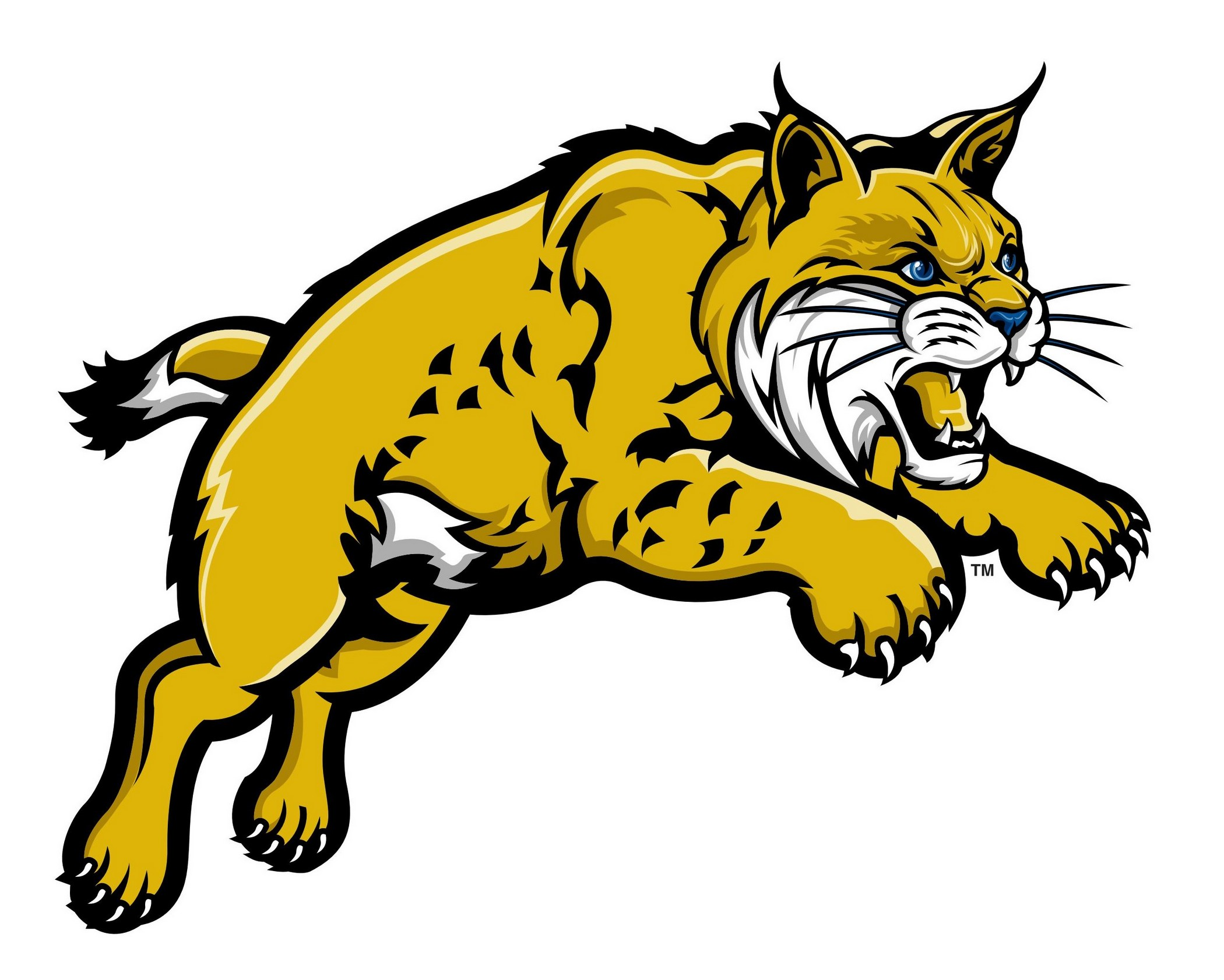 Bobcat clipart. For schools