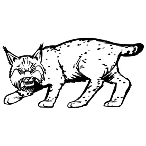 Coloring pages worksheet drawing. Bobcat clipart baby