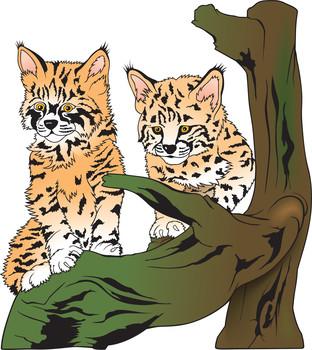 Bobcat clipart baby. Bobcats visit iowa hunter